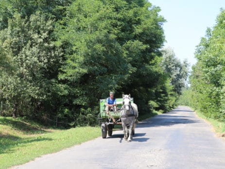 Horse and carriage Hungary